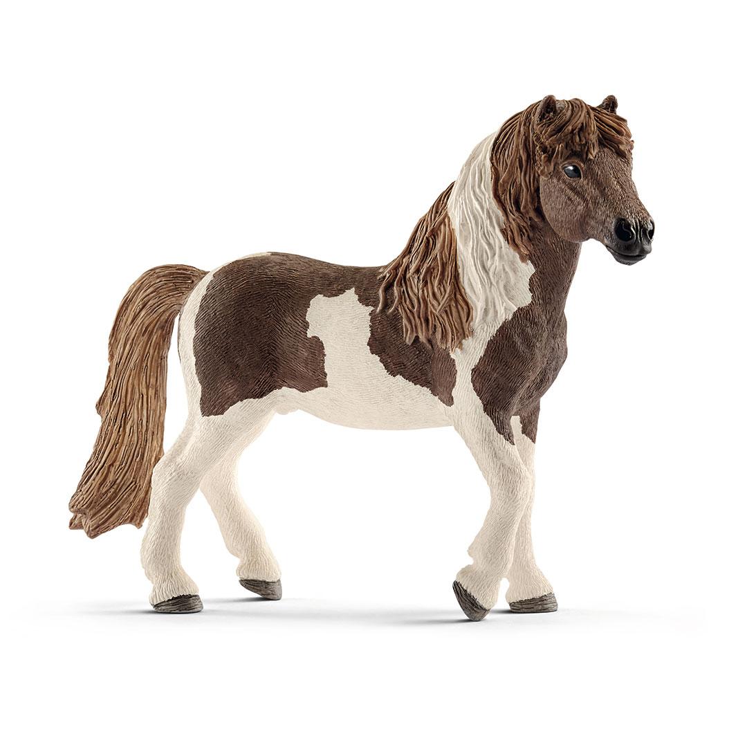 Semental poni islandés