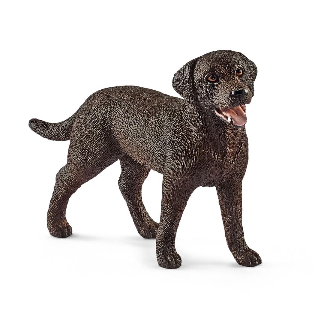 Labrador Retriever hembra