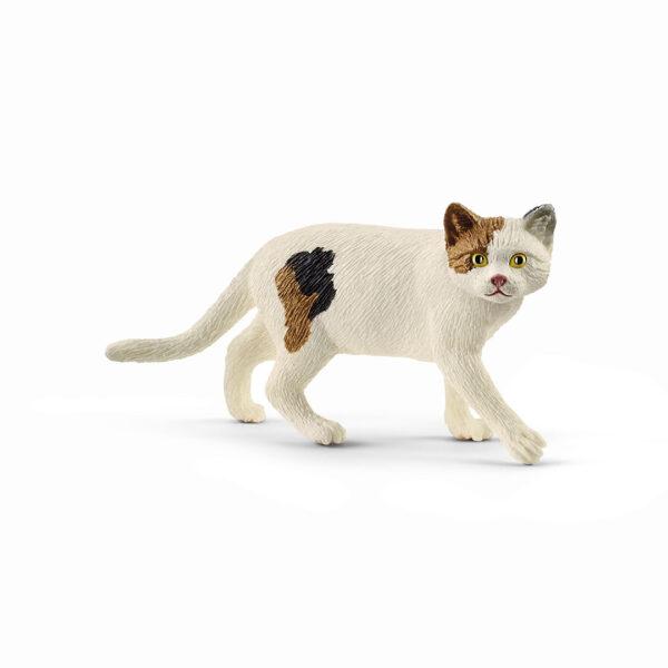 Gato de pelo corto americano