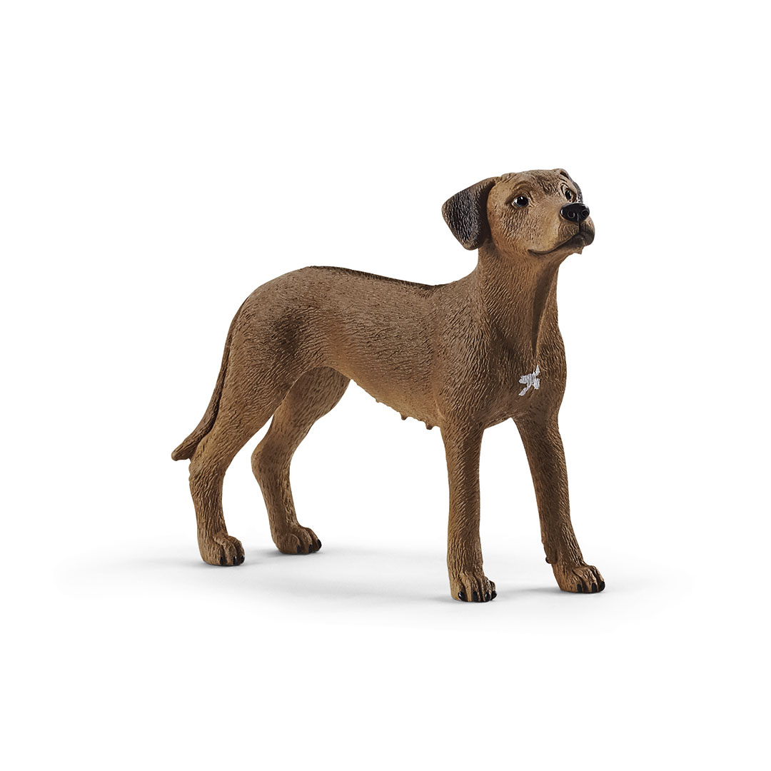 Perro crestado rodesiano