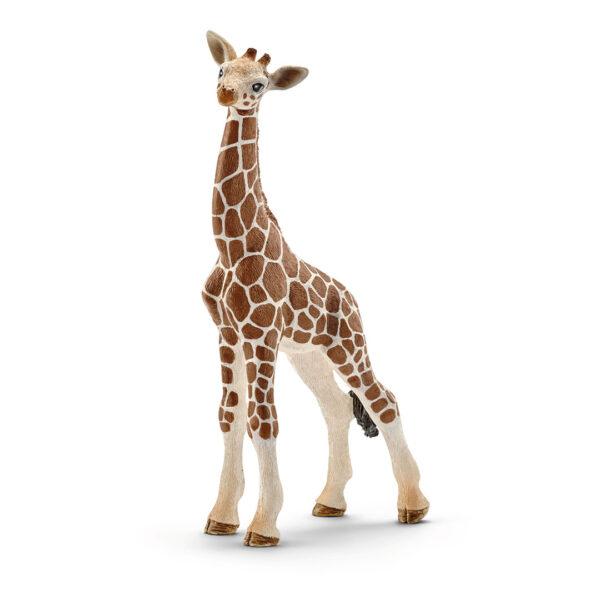 Cría de jirafa
