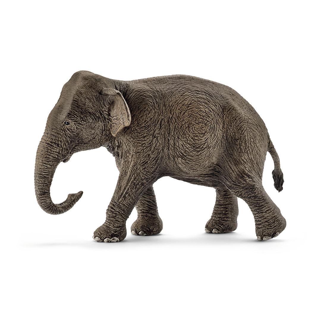 Elefante asiático hembra