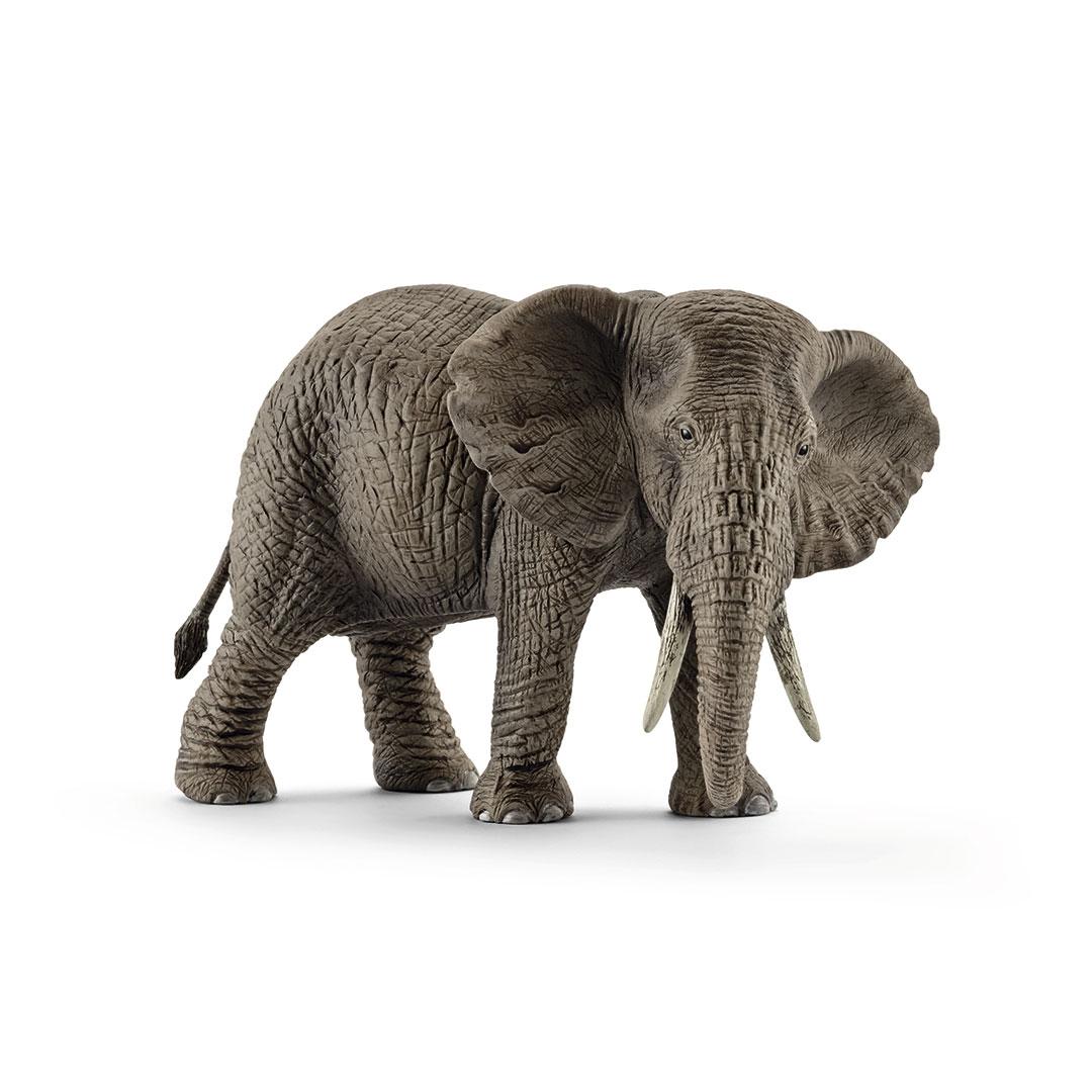 Elefante africano hembra