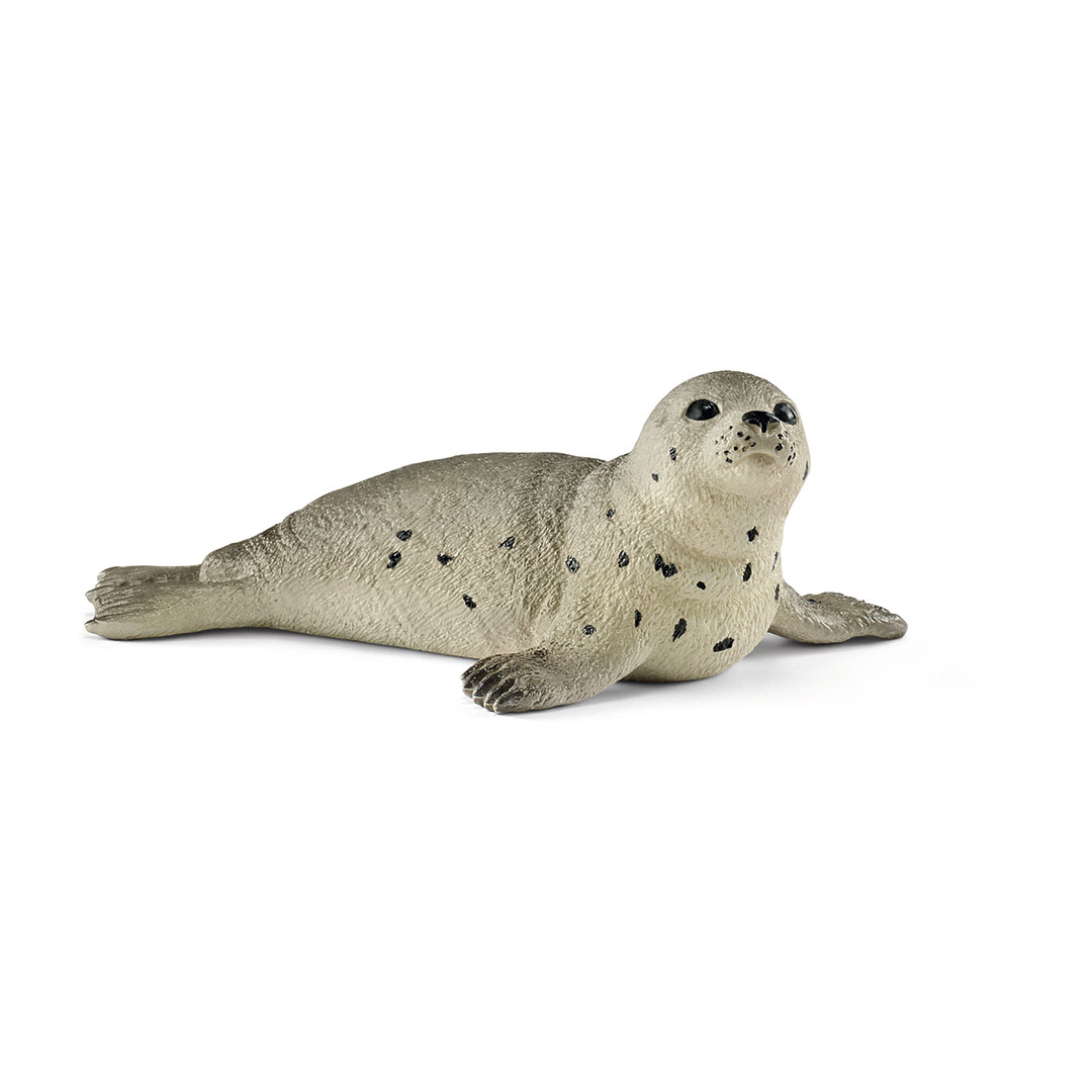Cría de foca